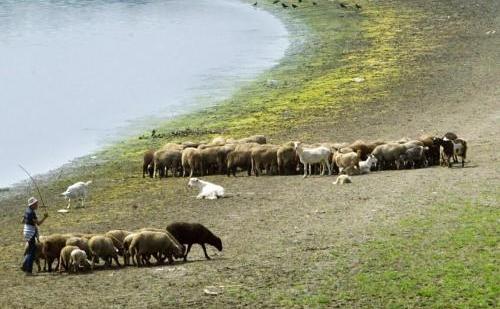Ciobanii aduc oile la adapat in apropiere de satul Dichiseni.