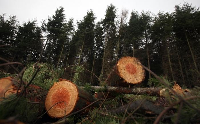 Păduri masacrate
