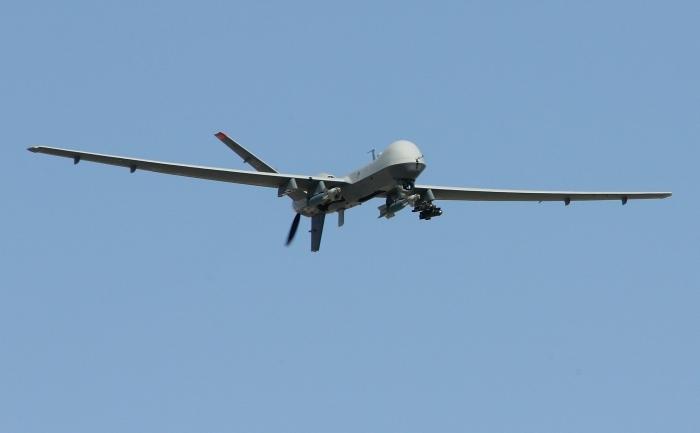 Drona americana.