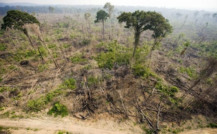 Defrisari masive ale padurii amazoniene in statul Para, nordul Braziliei