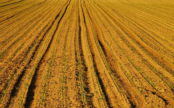 Pamant arabil