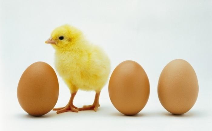 Hrana administrată găinilor afectează ouăle produse de acestea