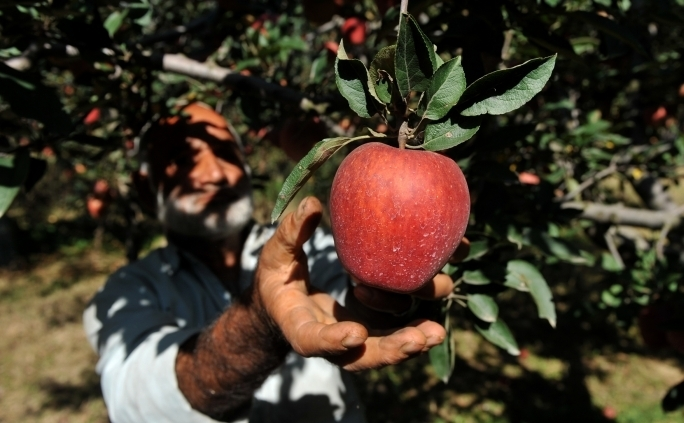 Pectina, ce intră în componenţa merelor, în combinaţie cu apă, limitează cantitatea de grăsime absorbită de celule.