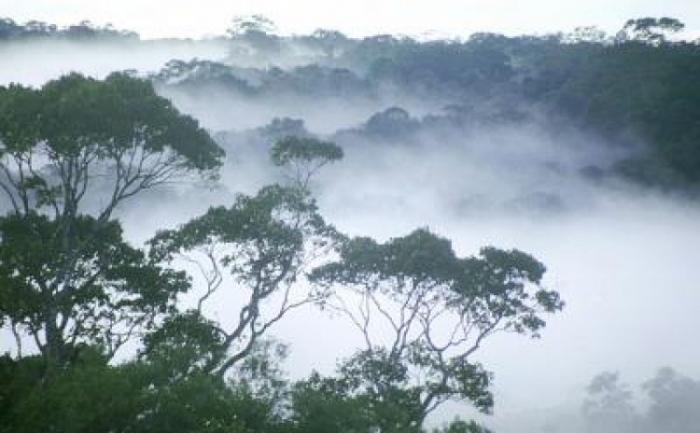 Ceata zorilor deasupra padurii amazoniene