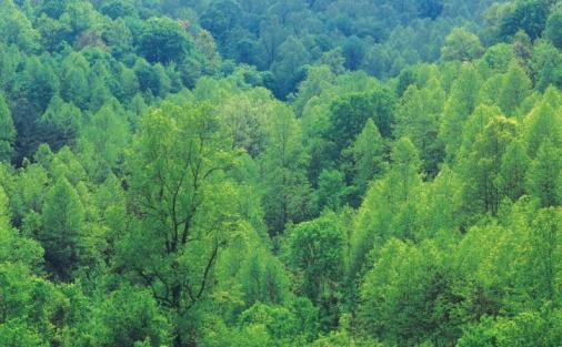 Pădurile româneşti ar putea deveni o sursă de carbon până în 2050