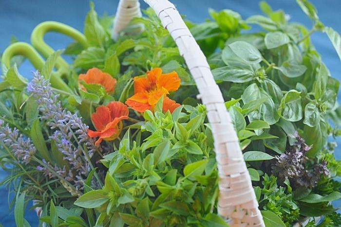 Plante din gradina