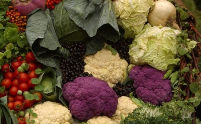 In lume există conopida în trei culori: albă, verde şi violetă