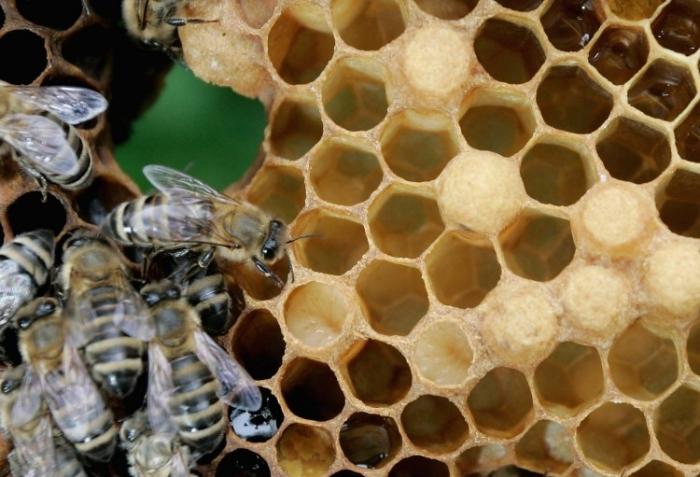 Cercetătorii au descoperit în mierea de albine o substanţă crucială pentru sănătatea albinelor şi care poate explica de ce mierea a fost considerată de milenii bună pentru organism