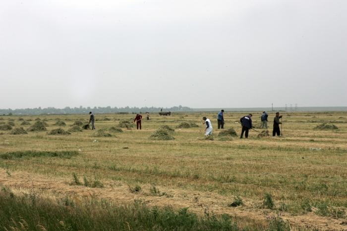 Ţărani pe câmp la seceriş