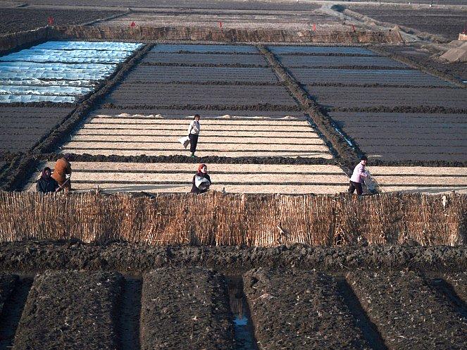 Fermieri nord coreeni muncind pe câmpuri lângă Phenian, aprilie 2012