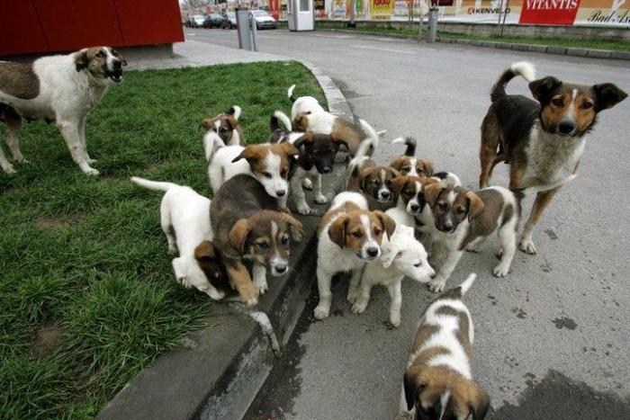 Familie canină