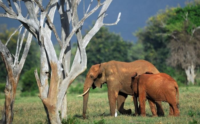 Elefanţii din Vietnam sunt ameninţaţi şi din interiorul ţării dar şi de peste hotare.