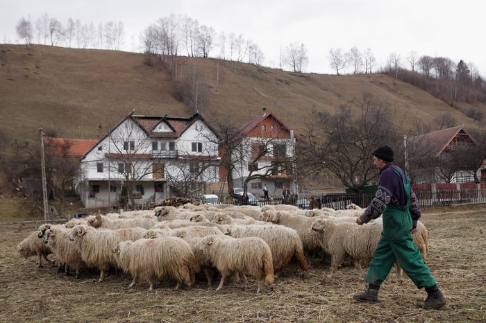 Păstor cu oile, Simon, România