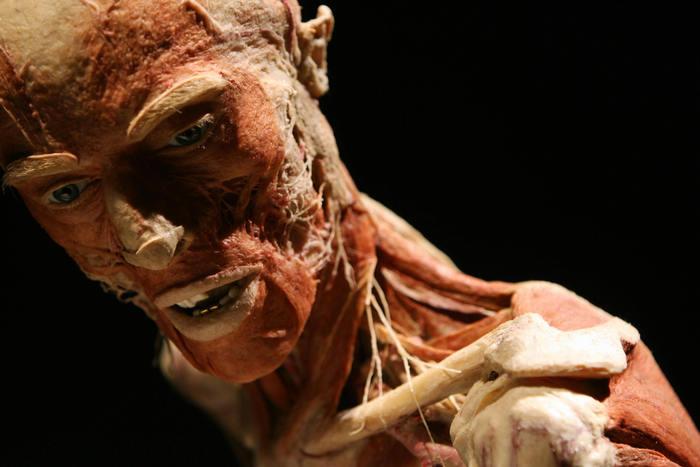 Cadavre plastinate în expoziţia organizată de Gunther von Hagens, Los Angeles