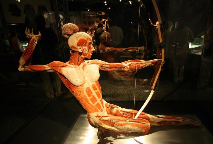 Cadavre plastinate în expoziţia organizată de Gunther von Hagens, poreclit Dr. Moarte, aprilie 2008 la California Science Center în Los Angeles