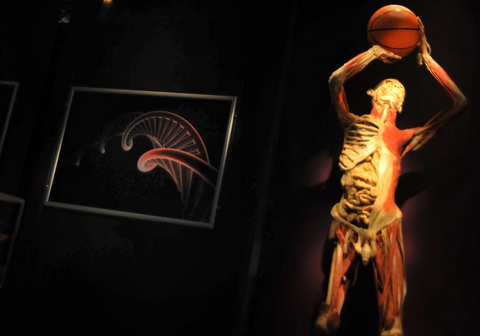 "Muzeul Antipa, expoziţia ""The Human Body"""