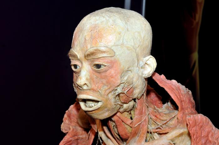 Muzeul Antipa, expoziţia The Human Body. În imagine, cadavre exponat, expuse