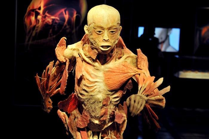 Muzeul Antipa, expoziţia The Human Body