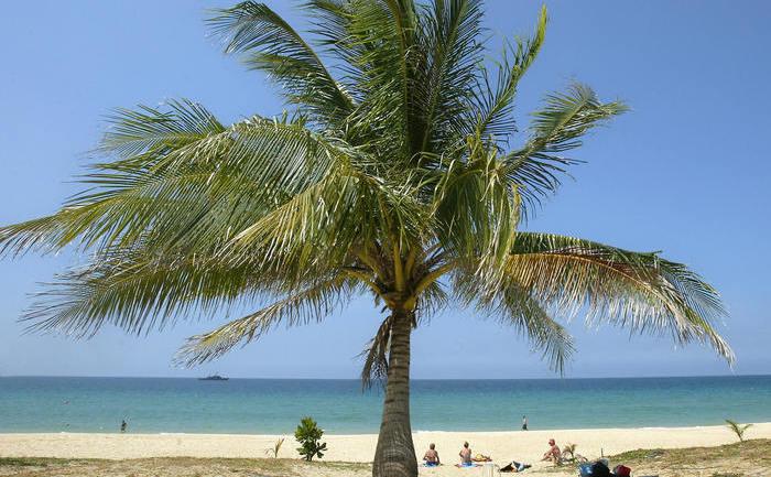 Plajă cu palmieri.