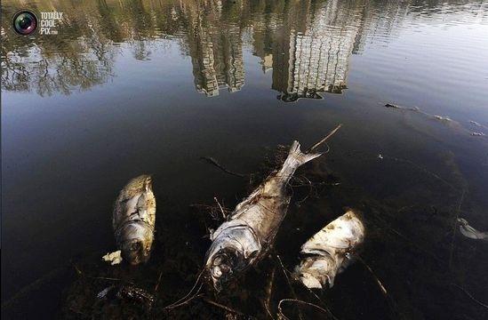 În China, timp de 20 de ani, au dispărut peste 27000 de râuri