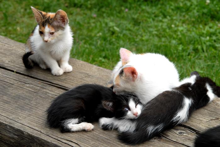 Pisici dormind