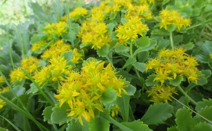 Flori galbene de primăvară