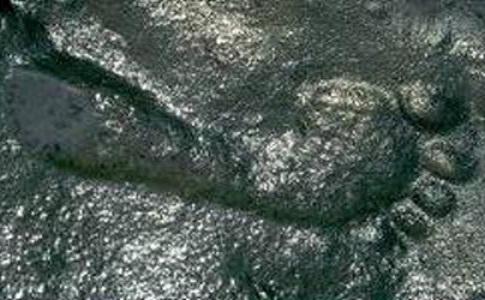 O urmă de picior uman este fosilizată într-o piatră care datează de acum aproximativ 290 de milioane de ani. Descoperirea a fost facută în 1987, în New Mexico, de paleontologul Jerry MacDonald.