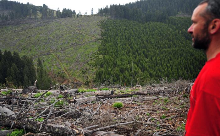 Un deal defrişat ilegal din Piatra Craiului, 10 mai 2010.