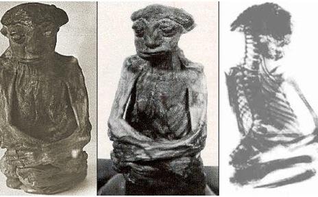 """O mumie găsită în Pedro Mountains în 1932, despre care se crede că a aparţinut unei rase de humaonizi numite Nin' am - """"micii oameni"""" cu care indienii Shoshone interacţionau adesea."""