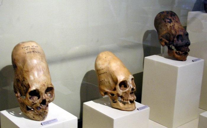 Cranii Paracas la Muzeul din Paracas