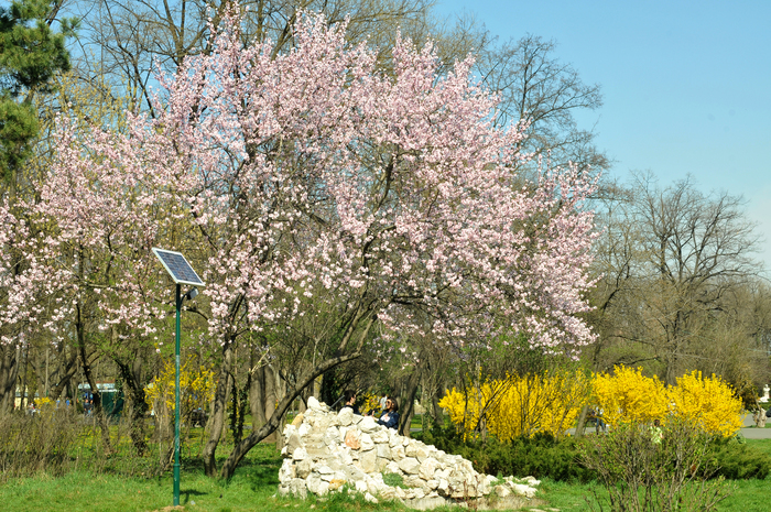 Primăvară de weekend în Parcul Herăstrău