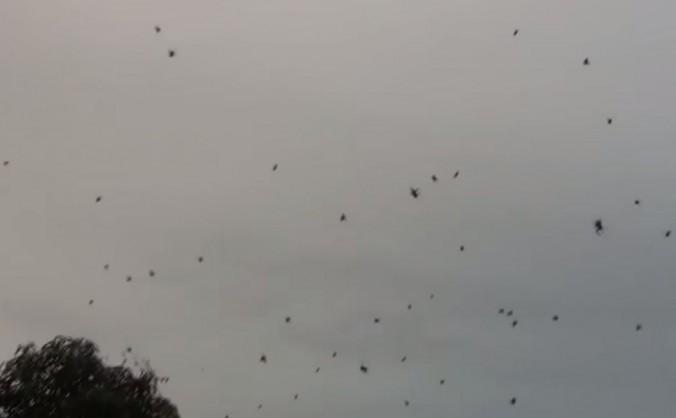 Ploaie de păianjeni în Brazilia
