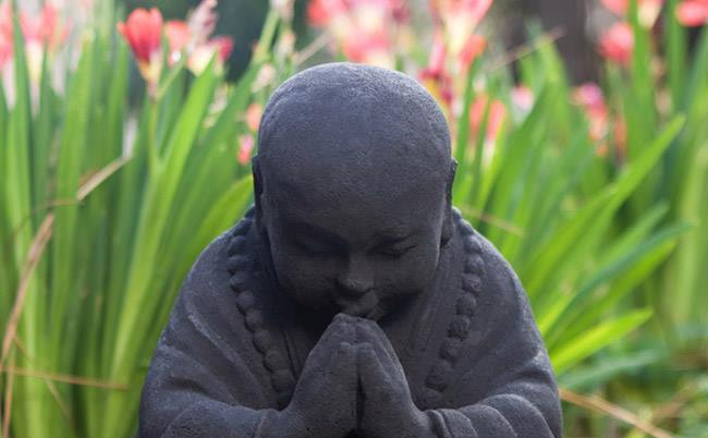 Călugăr junior