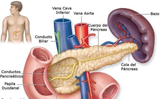 Localizarea pancreasului în organism.