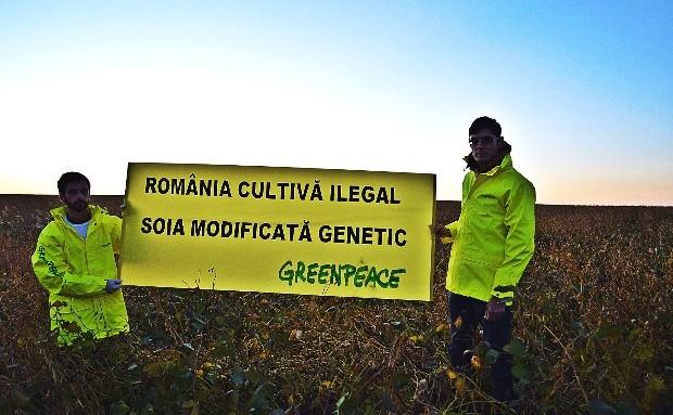 Cultură de soia modificată genetic în România.