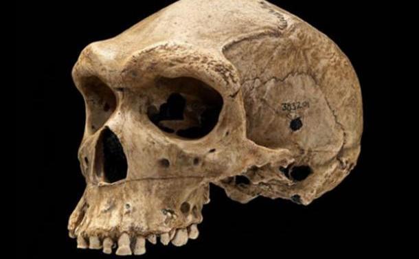"""O replică a craniului Kabwe din Zambia cu """"gaura de glonţ""""."""