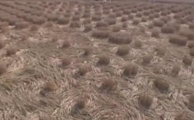 Desene în lanurile de grâu lăngă cel mai mare observator britanic. Iniţial la sol lucrurile păreau foarte dezordonate (Foto1)