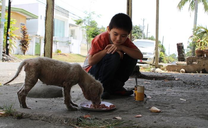 Băieţel hrănind un maidanez