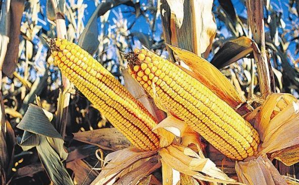 Monsanto vrea să-şi extindă operaţiunile în Rusia şi Ucraina.