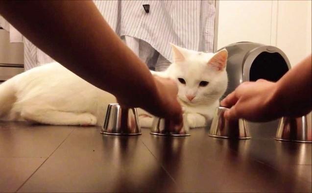 Cele mai prietenoase rase de pisici | Epoch Times România