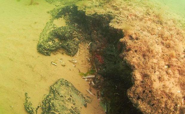 O porţiune din remarcabila padure submarină descoperită în Marea Nordului.