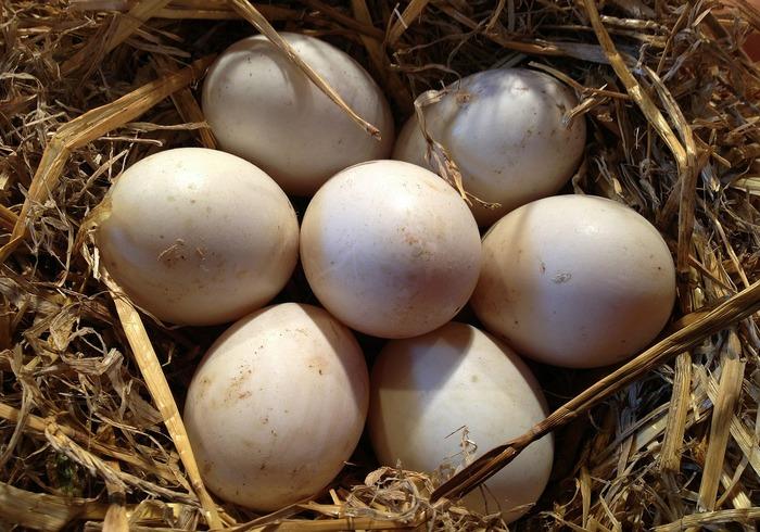 Ouă în cuib