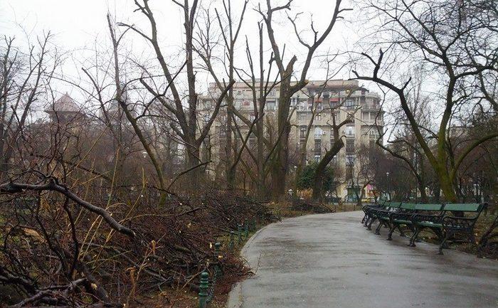 Copaci devastaţi în parcul Cişmigiu
