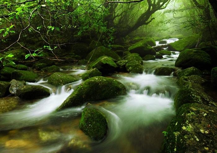 Insula Yakushima din Japonia