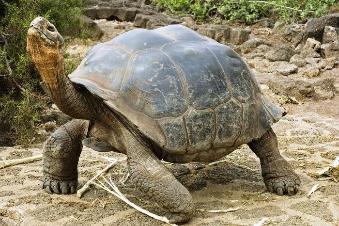 Curiozităţi despre broasca ţestoasă