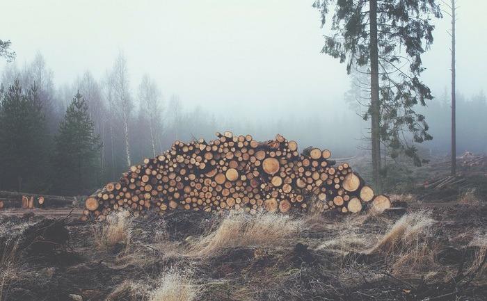 Păduri tăiate