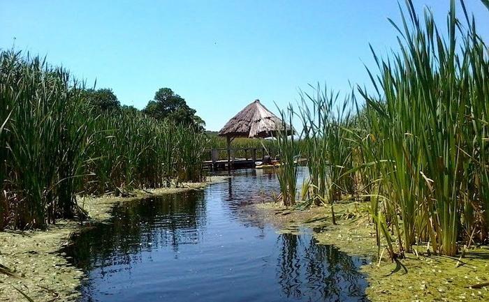 Rezervaţia Naturală Comana