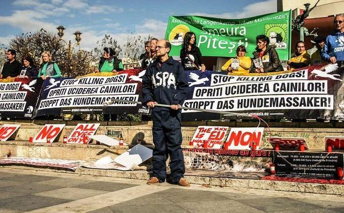 Yes! WE CARE!Protest internaţional împotriva uciderii în masă a câinilor comunitari din România.