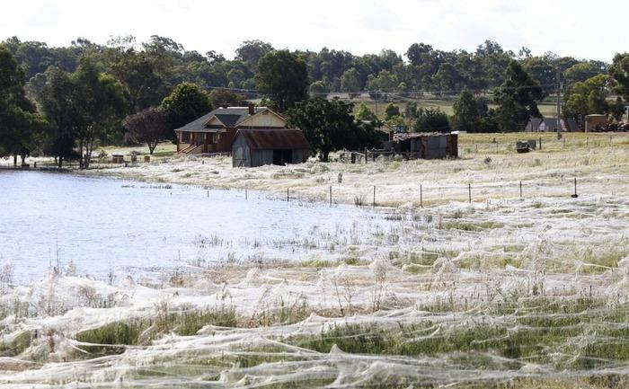 "Fenomenul ""ballooning"" observat la o gospodărie din Wagga   Wagga, Australia."