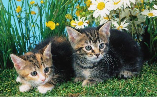 Plante care alungă pisicile